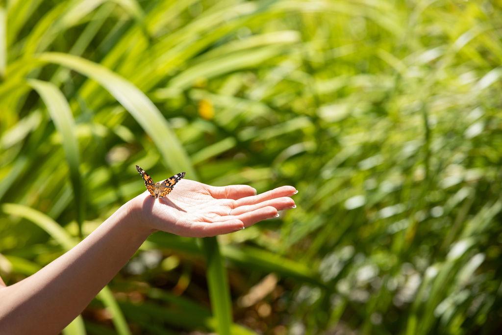 Butterfly Relase